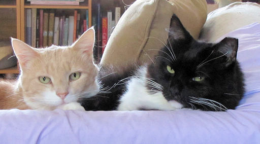 Photo of Wally, the Ginger Cat and Sebastian, the black and white tuxedo cat