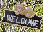 Welcome to the Ginger Cat B&B